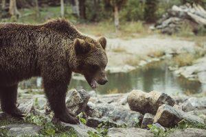 BEyond bootcamp 2019 Bear